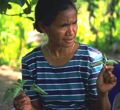 Passabe, Oe-cussi, woman with traditional medicinal plants