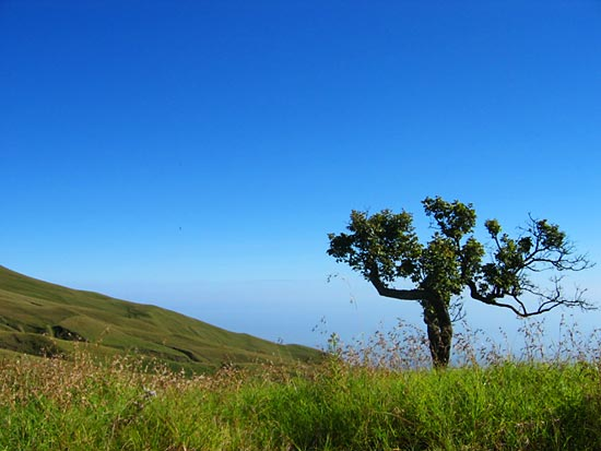 Tree on the top of Rinjani
