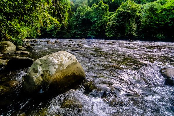Trekking in Gunung Leuser National Park