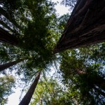 United States, California, Muir Woods National Monument