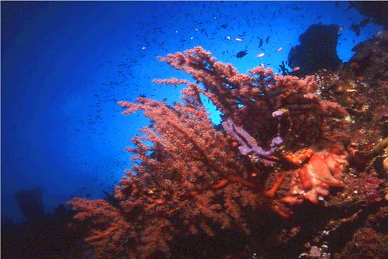 Deep reef in Gorontalo